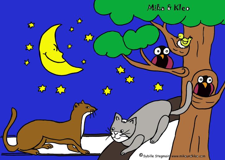 Marder mit Kleo - Website mit Farbe